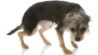 犬隻肢體語言 (附影片)