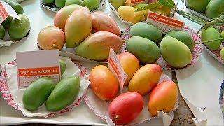 На фестивале манго в Индии показали более 300 сортов