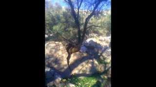 preview picture of video 'جبل حجر امنيعش  سيدي رضوان وزان المغرب'