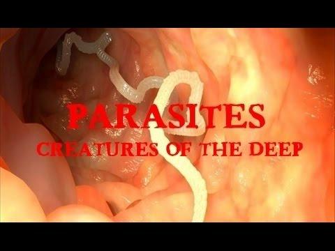 Mga imahe para sa mga parasito