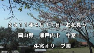 preview picture of video '2011年04月17日 お花見 牛窓 オリーブ園'