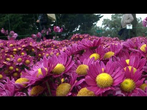 В Никитском ботаническом саду расцвели д