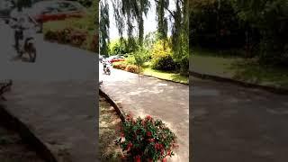 preview picture of video 'La victoire du PDCI a toumodi les modi don tombé(1)'