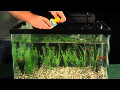 Introducing Fish to Your Aquarium