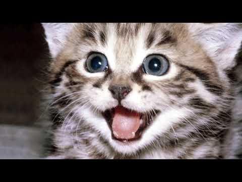 A gattini gli occhi striscia lacqua