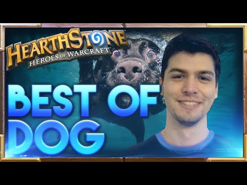Best Of Dog | Hearthstone Funny Lucky Fail Best Plays | Dog Hearthstone Moments
