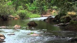 Nature's sound, Wonderful sound of a stream