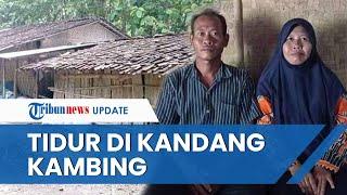 Sambil Menangis, Camat di Ngawi Janji Bantu Guru SD yang Tidur Seatap dengan Kandang Kambing