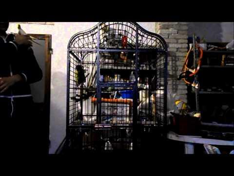 La gabbia giusta per i vostri pappagalli - Federico Orlandi