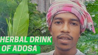 Kadha for cold and cough relief | Adivasi herbal drink made of Adosa leaves
