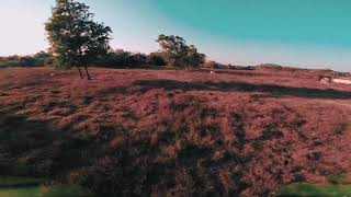 6 Month Into FPV ( FPV Freestyle )