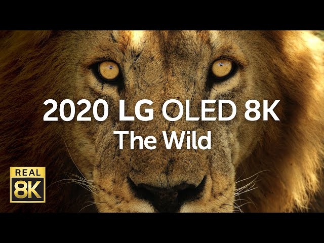 2020 LG OLED 8K l  The Wild 8K HDR 60fps