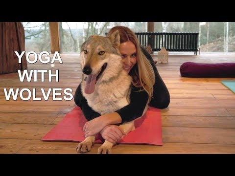 DOG YOGA WITH WOLVES