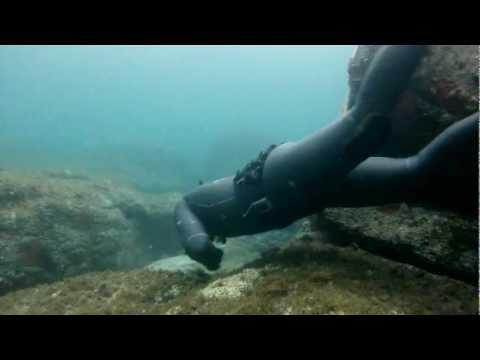 La pesca in video litvinovo