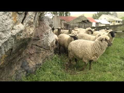 FROM THE RANCH: The Buzz on Wool