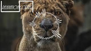 show me love edx remix radio edit sam feldt ft kimberly anne