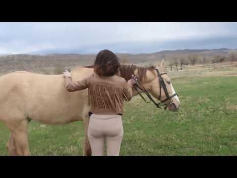Wonderful Beautiful Girl and Cute Horse Making Love