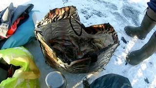 Отчет о рыбалке озеро тростенское