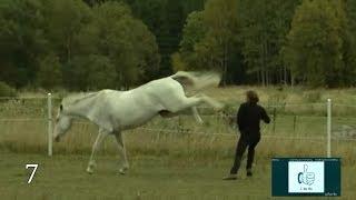 Horse vs man, Compilation