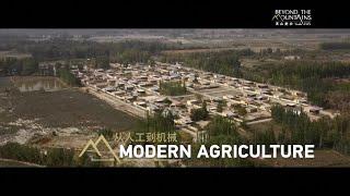 Mechanized Farming Revitalizes Cotton Industry in Bachu County of Xinjiang