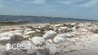 Toxic red tide poses threat to residents near Florida