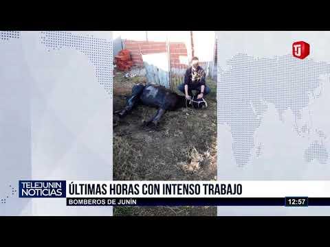 Bomberos rescatan a caballo