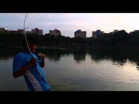Pasir ris park fishing pond! 4.5grouper
