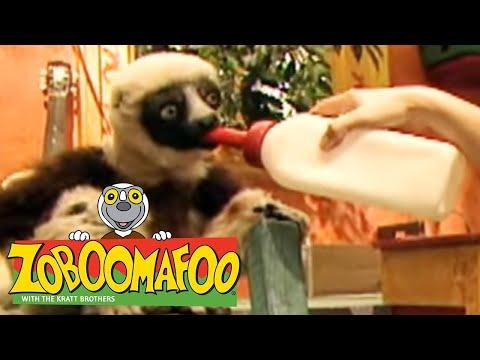 Zoboomafoo - Cats part 2 - смотреть онлайн на Hah Life