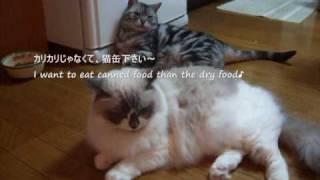 猫缶ちょうだい~だらけ編  I Want Canned Food ~slack Off version