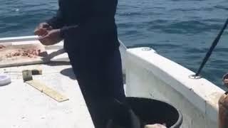 Вот это рыбалка прикол