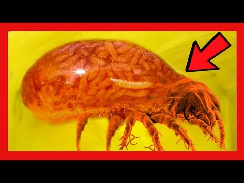 Nyálka paraziták