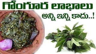 గోంగూర లాభాలు అన్నీ ఇన్ని కావు ..! Kenaf Health Benefits - Telugu Health Tips