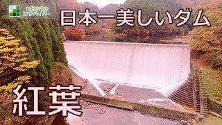 日本一美しいダムの紅葉ドローン映像4K白水ダム絶景九州の秘境人気の紅葉スポット