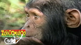 🐒 Zoboomafoo🐒 Season 1 Episode 5 - Happy Lemur Day | HD