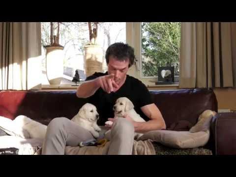Bijtringen voor je pup