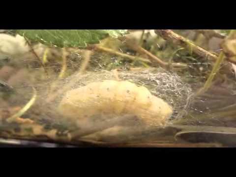 Uri ng mga worm sa lalaking litrato