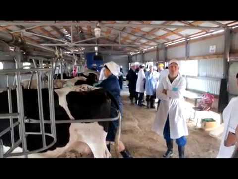 Республиканский конкурс операторов по искусственному осеменению коров и телок