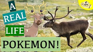 What Animal is like a Pokemon? | Caribou vs Reindeer | Stantler Pokemon | Animals & Pop Culture