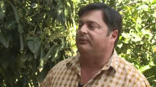 Why Is This Farmer Planting Avocado Trees Among His Lemon Trees?