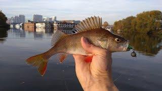 Рыбалка на москва реке в нагатинский затон