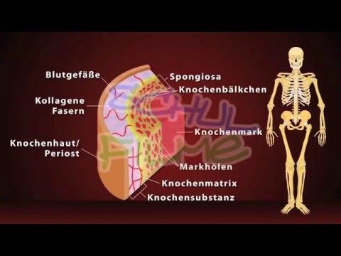 Wann Ultraschall des Kniegelenks