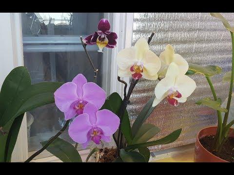 Обзор орхидей. Нужны ли? ))