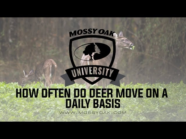 The Effect Moon Phase Has on Hunting Deer | Mossy Oak