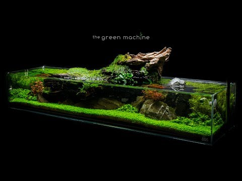 Aquascape Tutorial: Simplicity by James Findley - how to create a planted tank