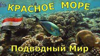 Этот ролик об удивительном подводном мире Красного моря. Мы отдыхали  в Египте много раз. Последний раз в марте 2020 г. в отеле Dreams Beach Resort , Египет Шарм Эль Шейх.  Здесь потрясающий коралловый риф, длина которого составляет