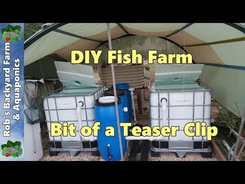 , title : 'DIY Fish farm for the back yard, bit of a teaser clip...