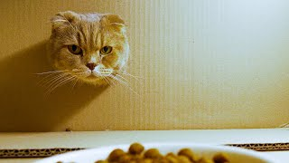 뚱뚱한 고양이는 먹을 수 없어요!?😾🍗