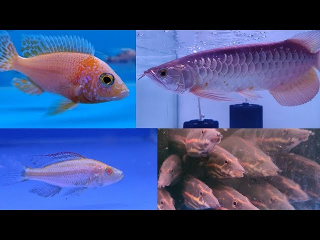 Aquarium Fish Types at Farhat Fisheries Fish Store Kurla