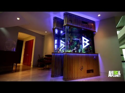 Marshawn Lynch's Beast Mode Fish Tank