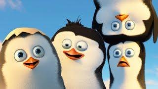 DreamWorks Madagascar em Português | Os Pinguins de Madagascar -Trecho Exclusivo |Desenhos Animados